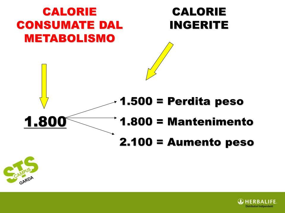 CALORIE CONSUMATE DAL METABOLISMO