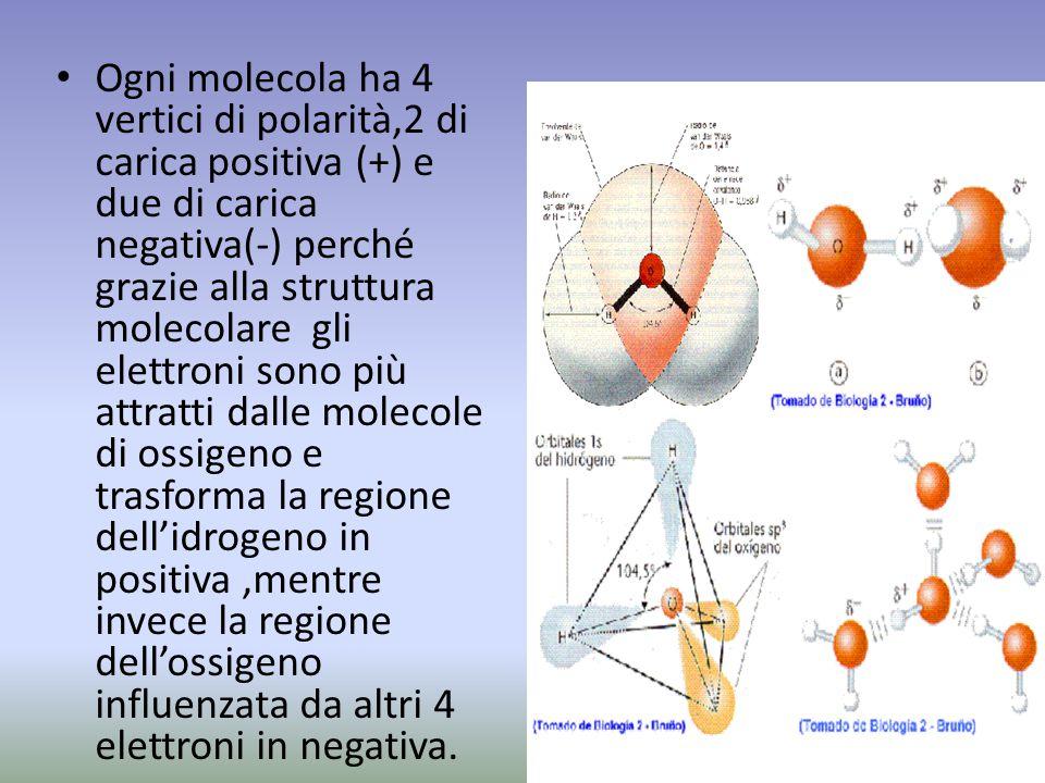 Ogni molecola ha 4 vertici di polarità,2 di carica positiva (+) e due di carica negativa(-) perché grazie alla struttura molecolare gli elettroni sono più attratti dalle molecole di ossigeno e trasforma la regione dell'idrogeno in positiva ,mentre invece la regione dell'ossigeno influenzata da altri 4 elettroni in negativa.