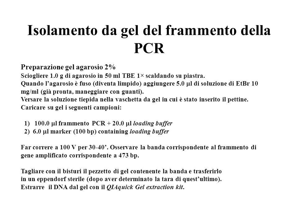 Isolamento da gel del frammento della PCR