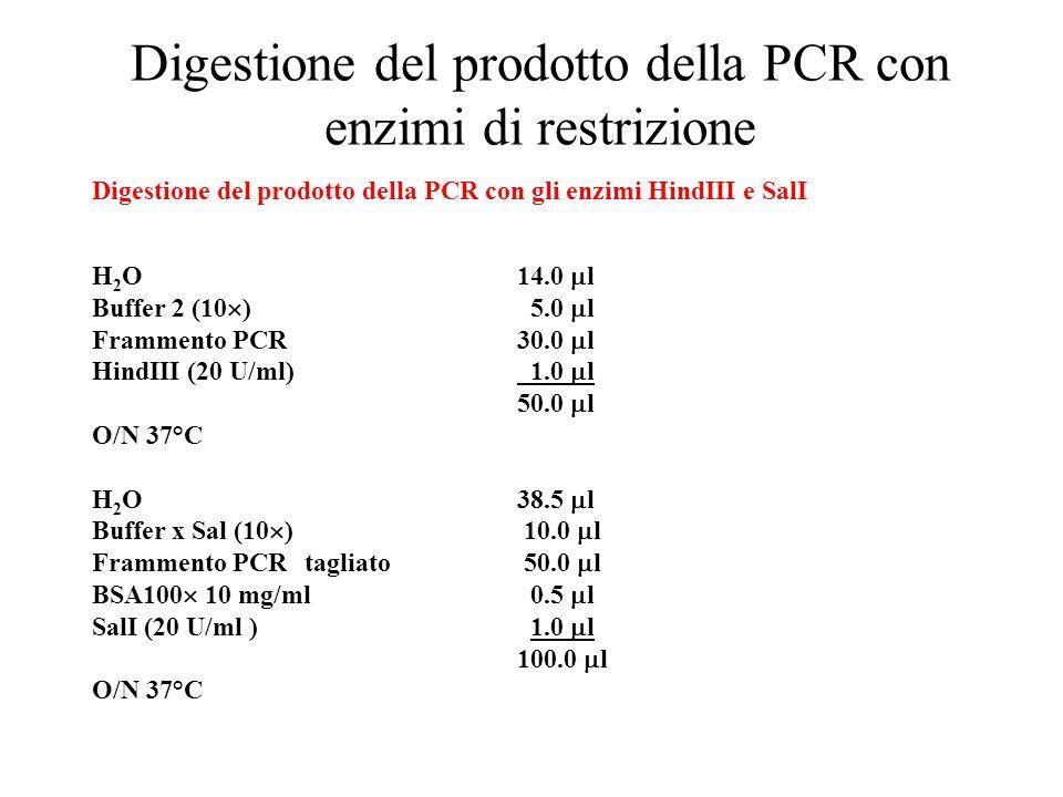 Digestione del prodotto della PCR con enzimi di restrizione