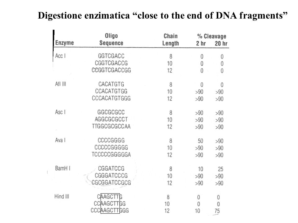 Digestione enzimatica close to the end of DNA fragments