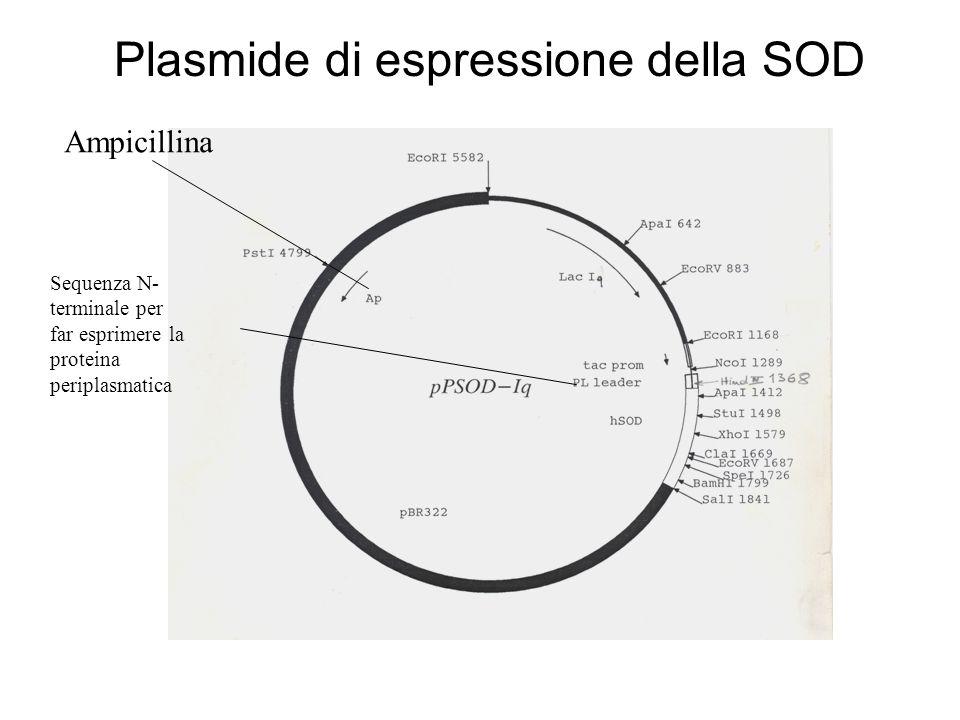 Plasmide di espressione della SOD