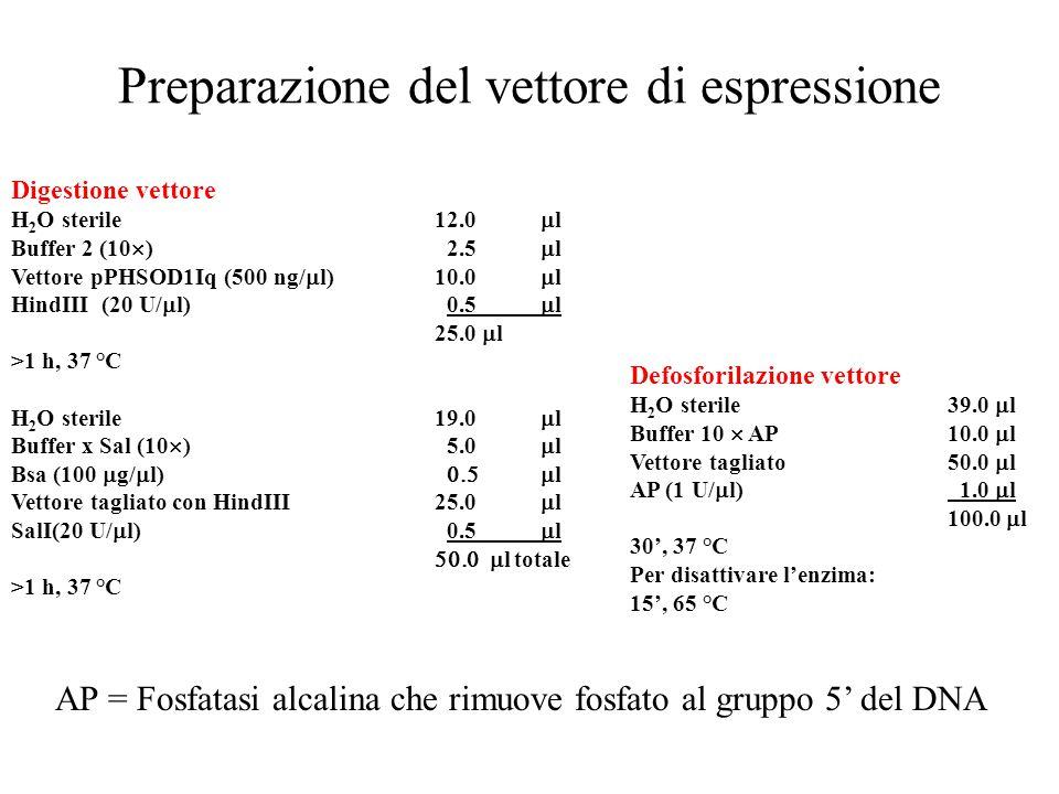 Preparazione del vettore di espressione