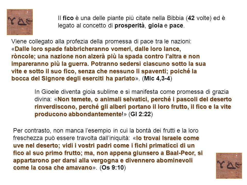 Il fico è una delle piante più citate nella Bibbia (42 volte) ed è legato al concetto di prosperità, gioia e pace.
