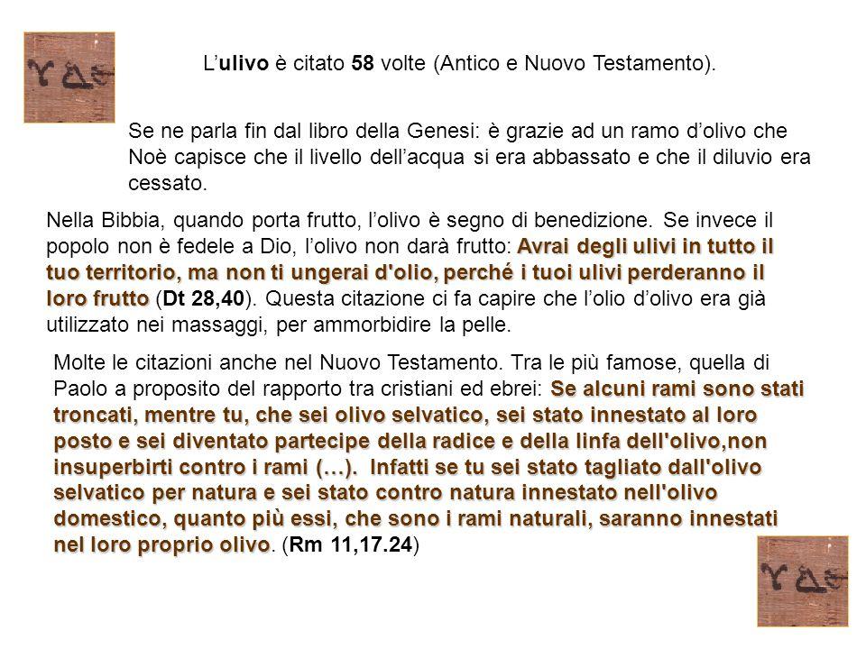 L'ulivo è citato 58 volte (Antico e Nuovo Testamento).