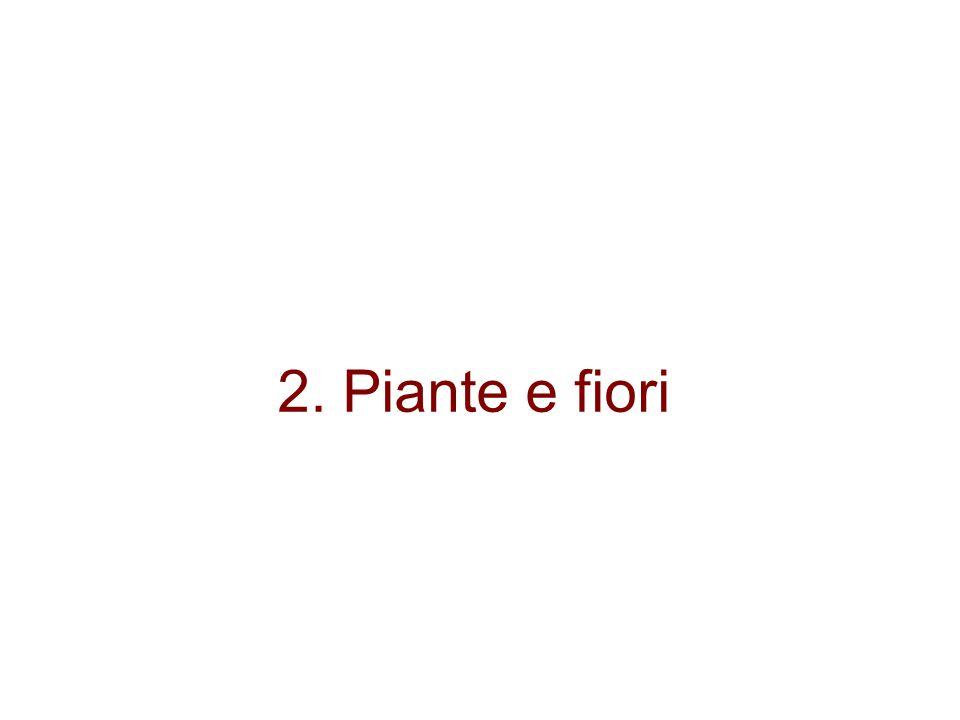 2. Piante e fiori