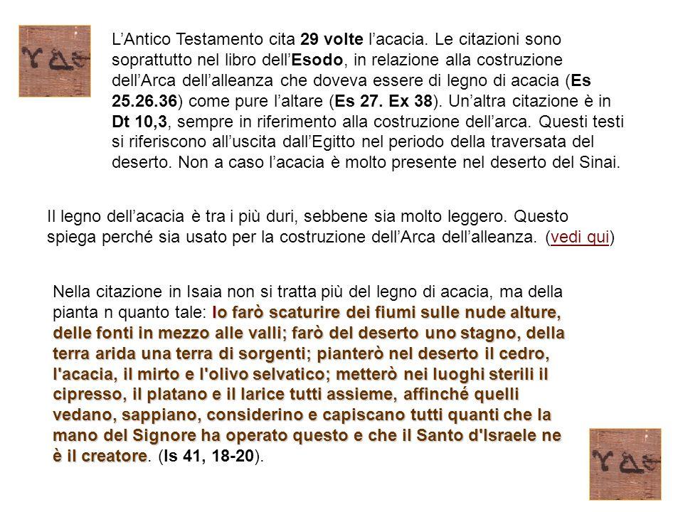 L'Antico Testamento cita 29 volte l'acacia