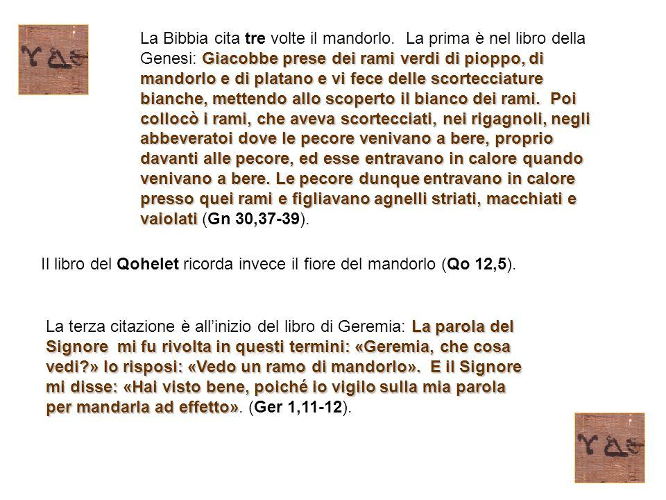 La Bibbia cita tre volte il mandorlo
