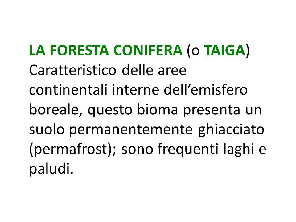 LA FORESTA CONIFERA (o TAIGA)