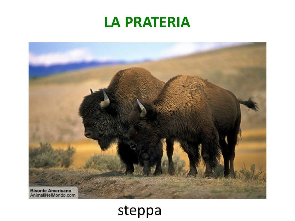 LA PRATERIA steppa