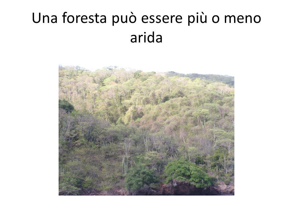 Una foresta può essere più o meno arida