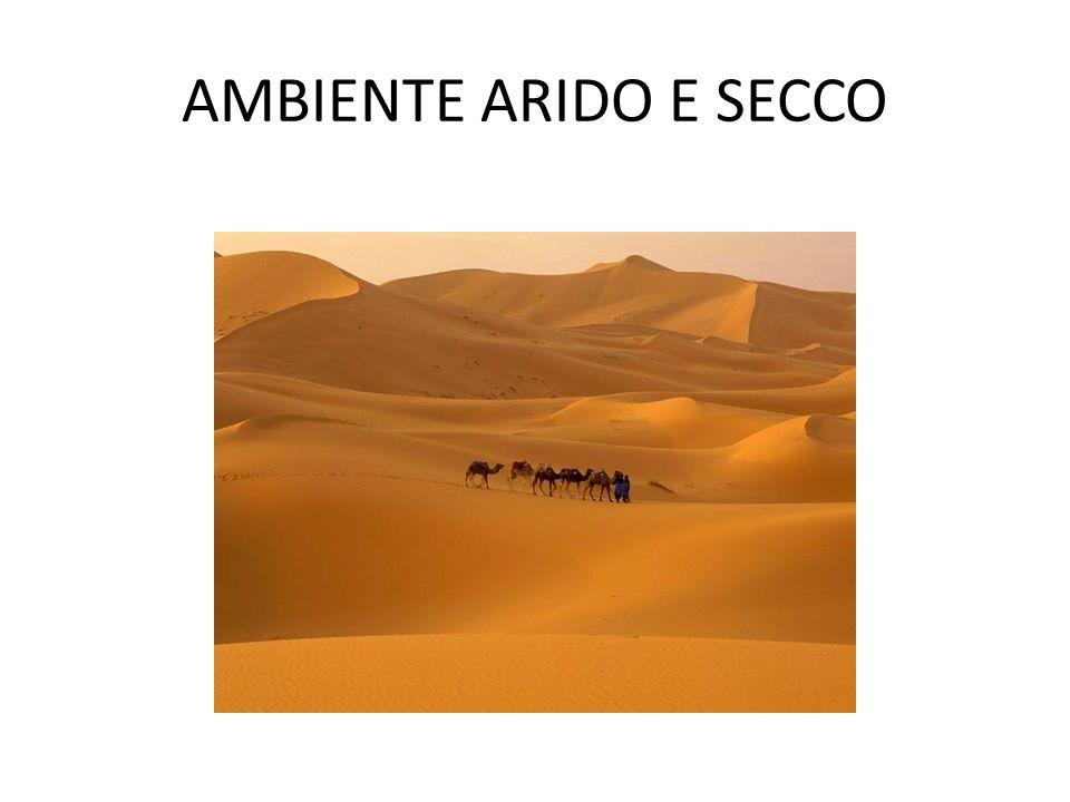 AMBIENTE ARIDO E SECCO