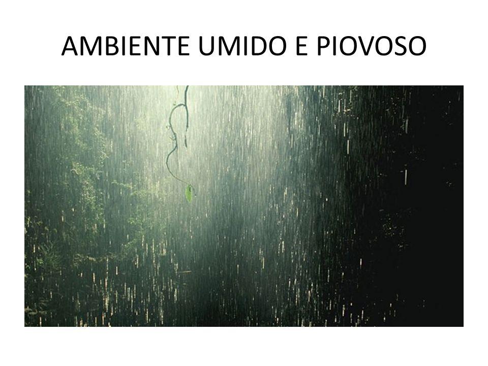 AMBIENTE UMIDO E PIOVOSO