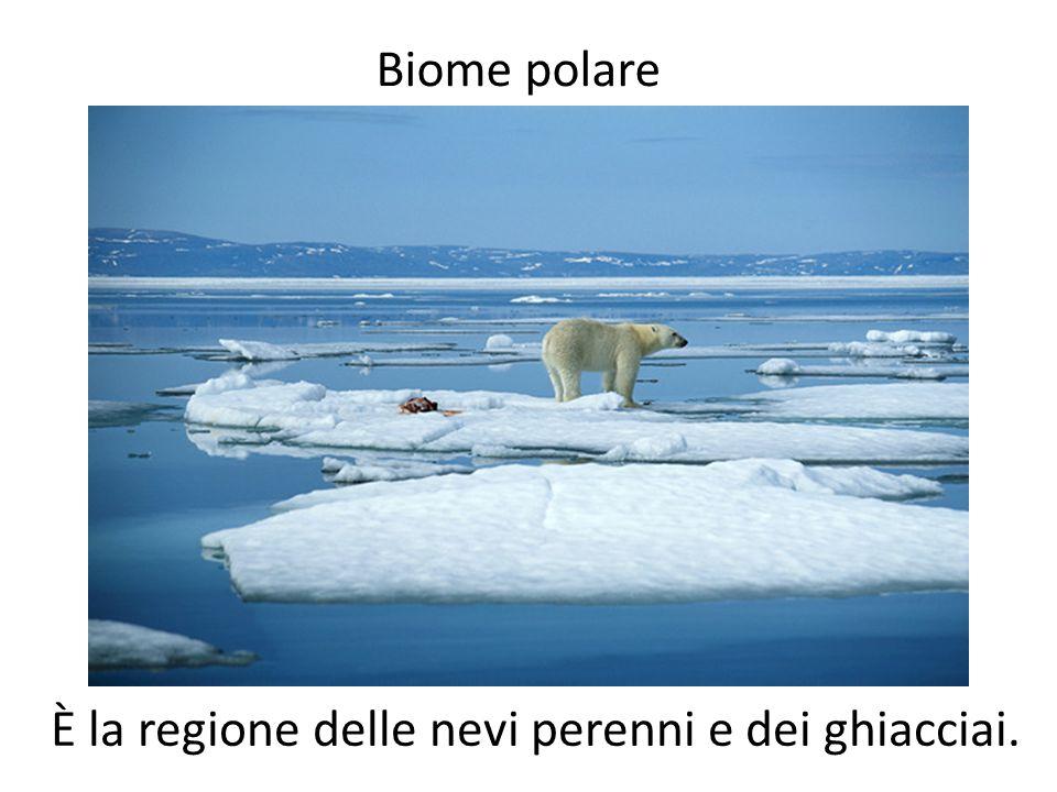 È la regione delle nevi perenni e dei ghiacciai.