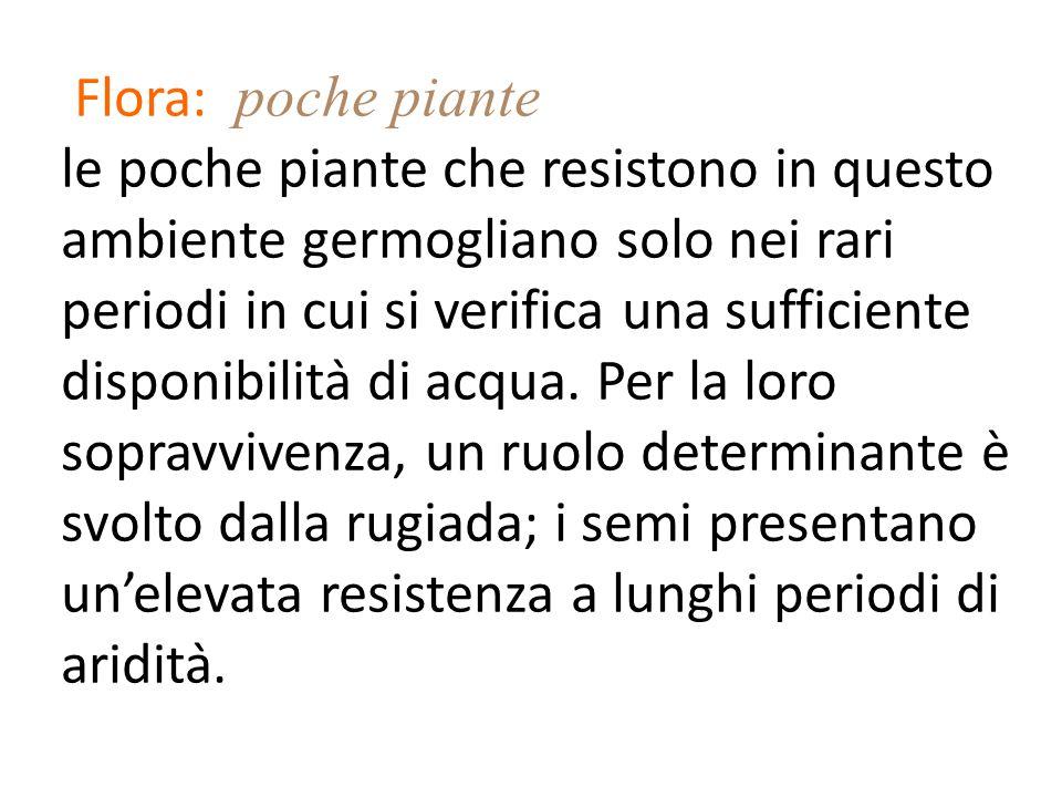 Flora: poche piante