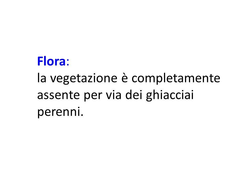 Flora: la vegetazione è completamente assente per via dei ghiacciai perenni.