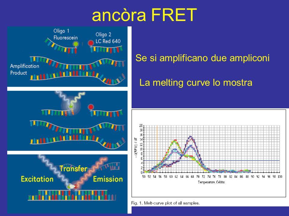 ancòra FRET Se si amplificano due ampliconi La melting curve lo mostra