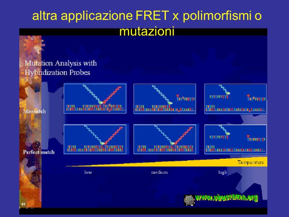 altra applicazione FRET x polimorfismi o mutazioni