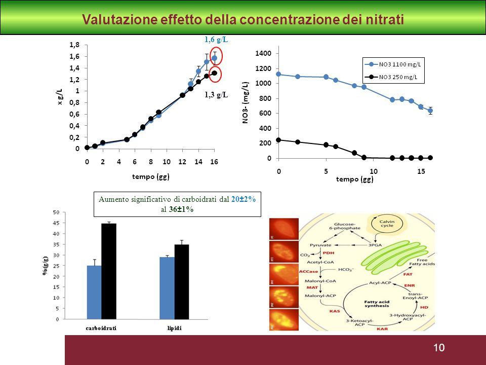 Valutazione effetto della concentrazione dei nitrati