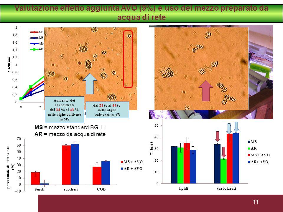 Aumento dei carboidrati nelle alghe coltivate in MS