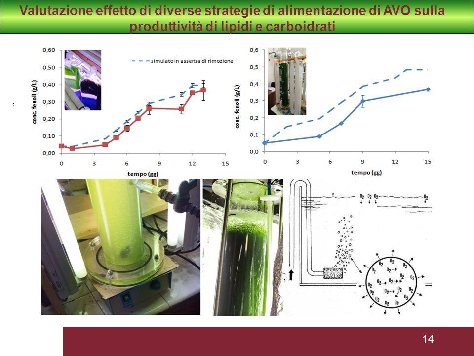 Valutazione effetto di diverse strategie di alimentazione di AVO sulla produttività di lipidi e carboidrati
