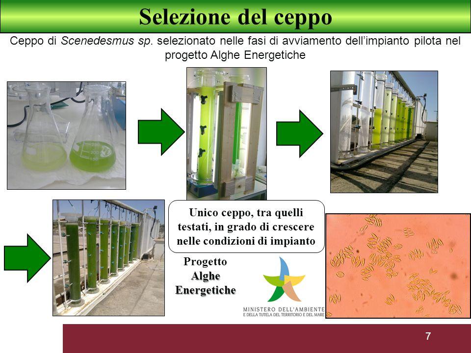 Progetto Alghe Energetiche