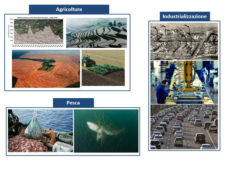 Agricoltura Industrializzazione Pesca
