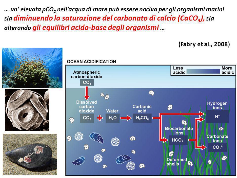… un' elevata pCO2 nell'acqua di mare può essere nociva per gli organismi marini sia diminuendo la saturazione del carbonato di calcio (CaCO3), sia alterando gli equilibri acido-base degli organismi …