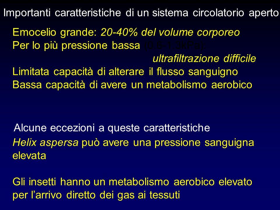 Importanti caratteristiche di un sistema circolatorio aperto