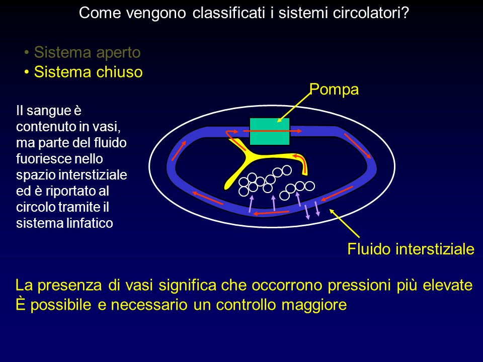 Come vengono classificati i sistemi circolatori
