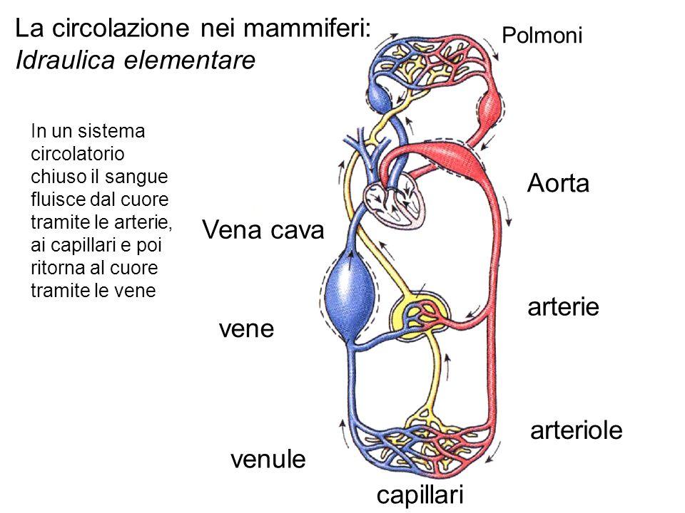 La circolazione nei mammiferi: Idraulica elementare