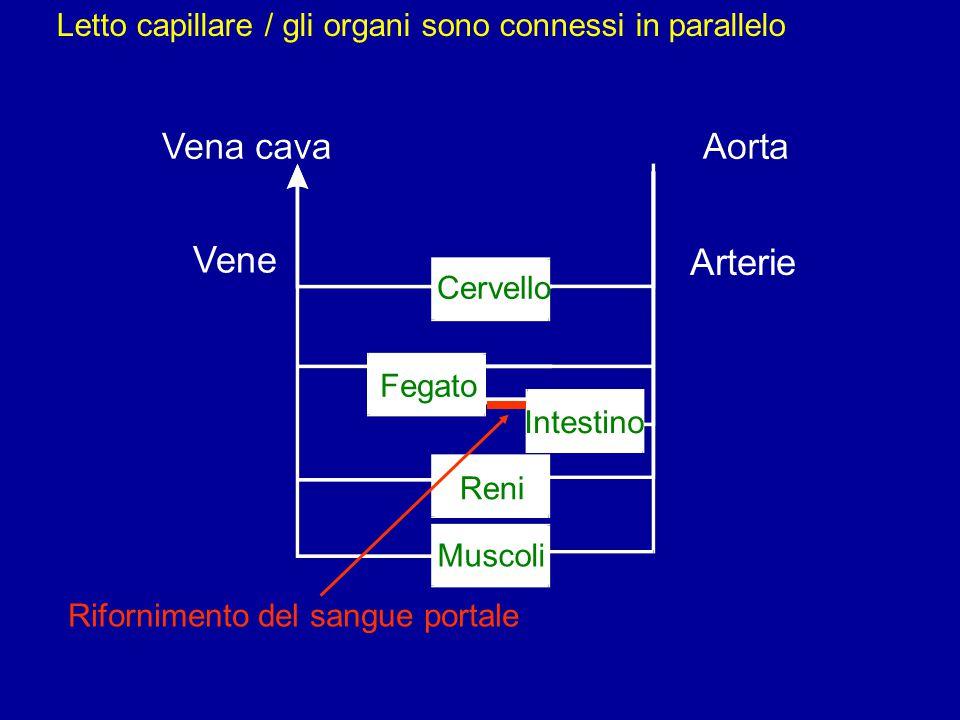 Vene Arterie Letto capillare / gli organi sono connessi in parallelo