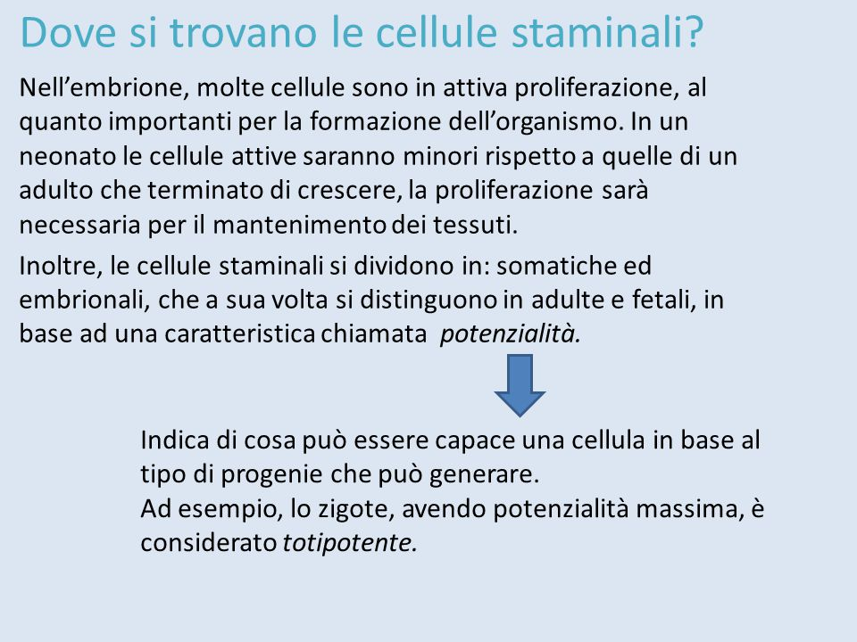 Dove si trovano le cellule staminali