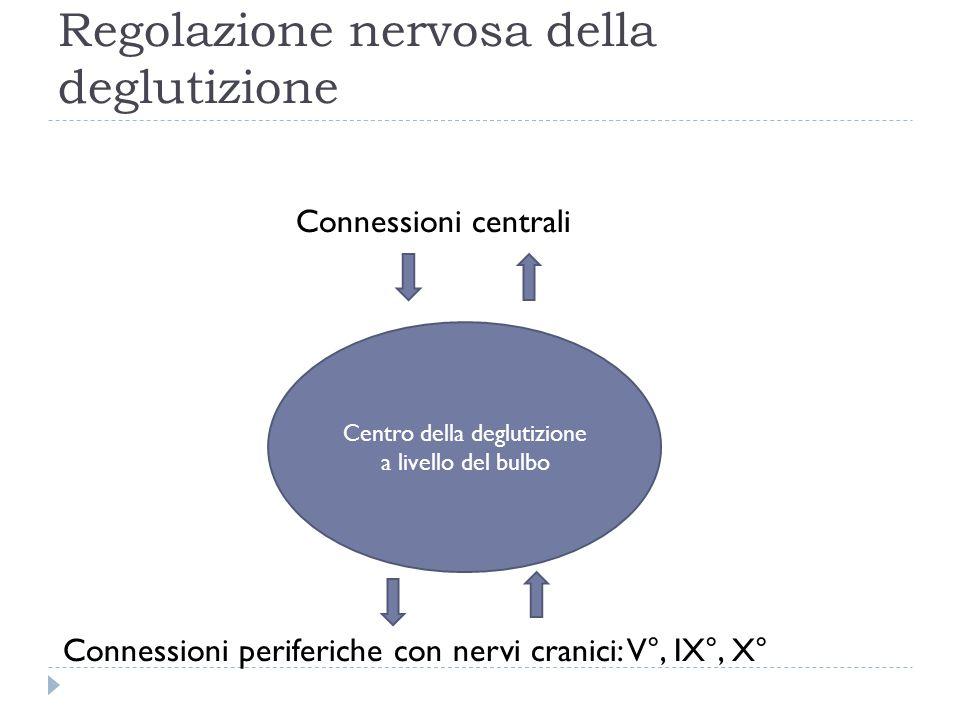 Regolazione nervosa della deglutizione