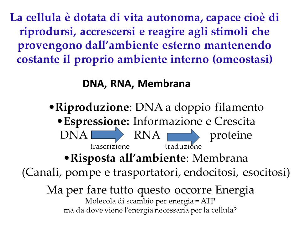 Riproduzione: DNA a doppio filamento