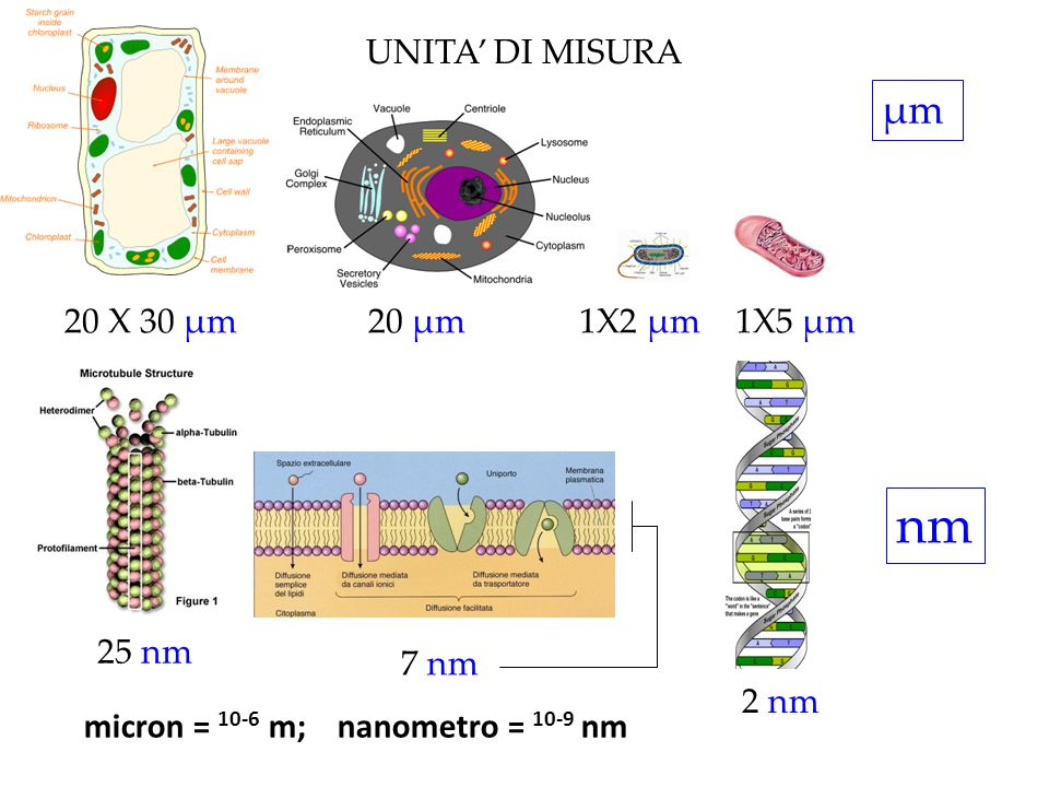 nm μm UNITA' DI MISURA 20 X 30 μm 20 μm 1X2 μm 1X5 μm 25 nm 7 nm 2 nm