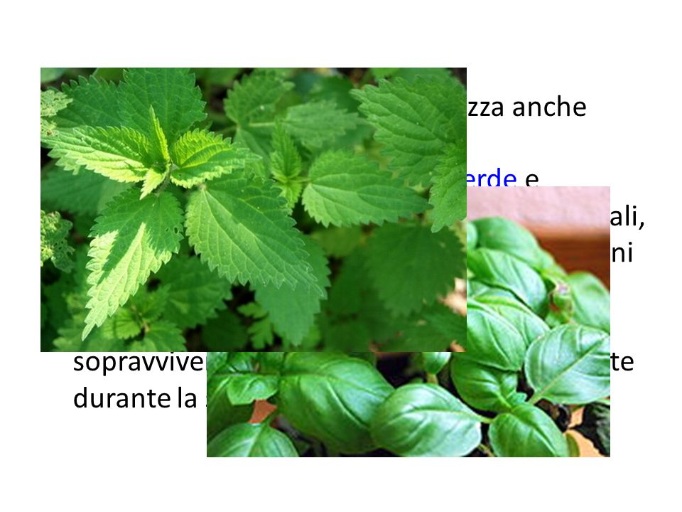 Insieme al termine pianta si utilizza anche quello di erba