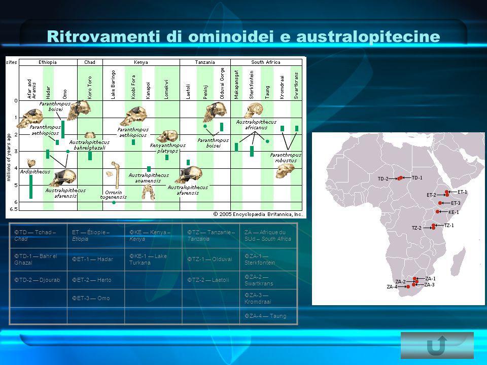 Ritrovamenti di ominoidei e australopitecine