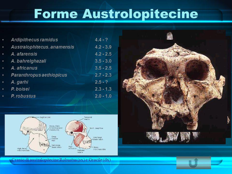 Forme Austrolopitecine