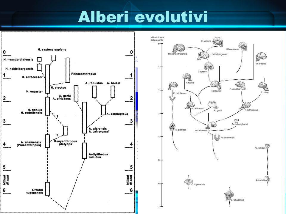 Alberi evolutivi
