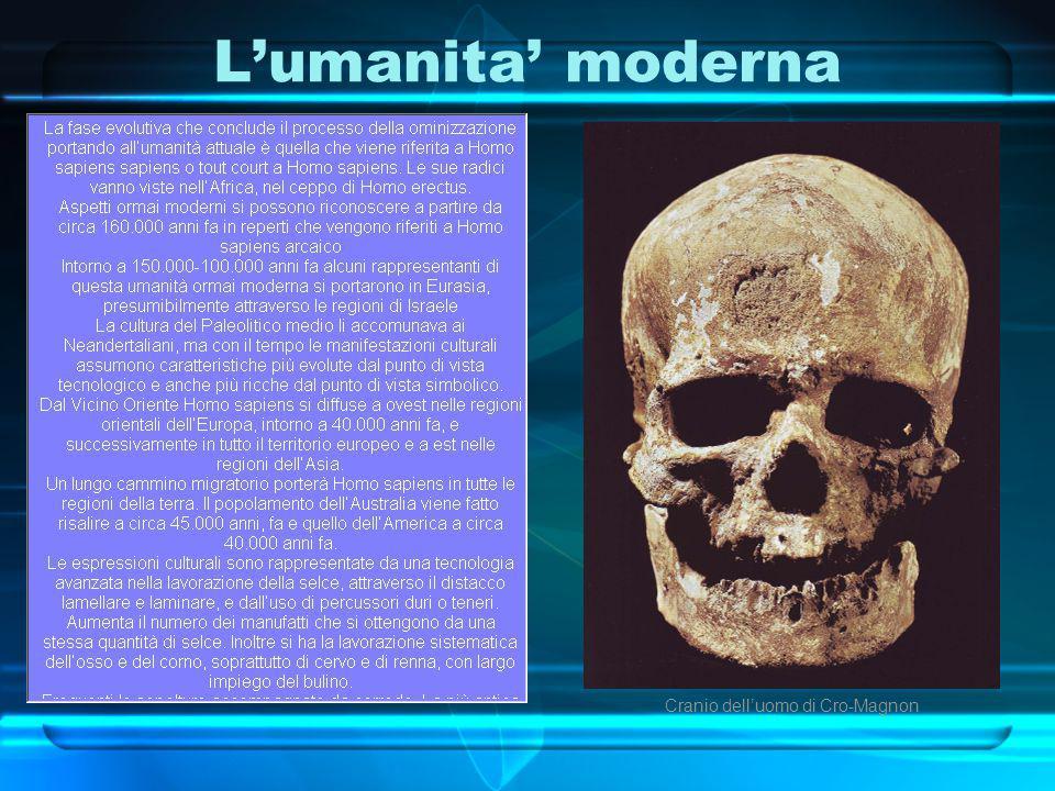 Cranio dell'uomo di Cro-Magnon