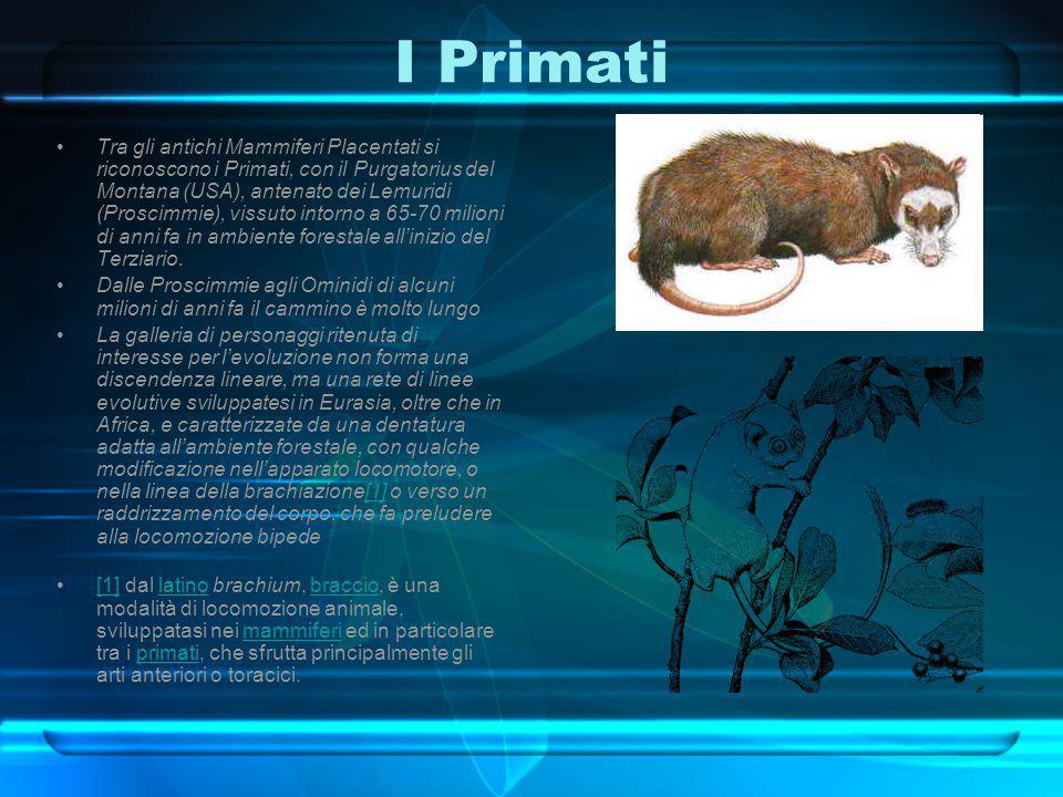 I Primati