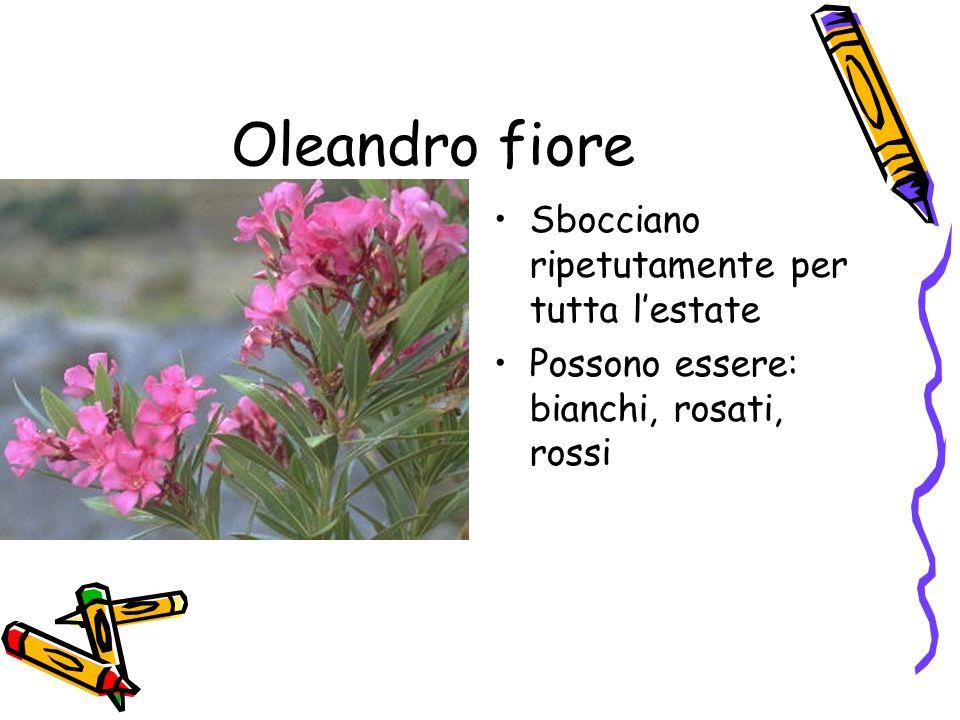 Oleandro fiore Sbocciano ripetutamente per tutta l'estate
