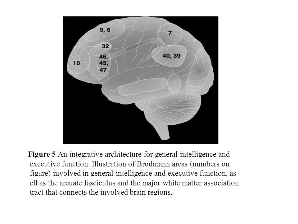 Figure 5 An integrative architecture for general intelligence and executive function.