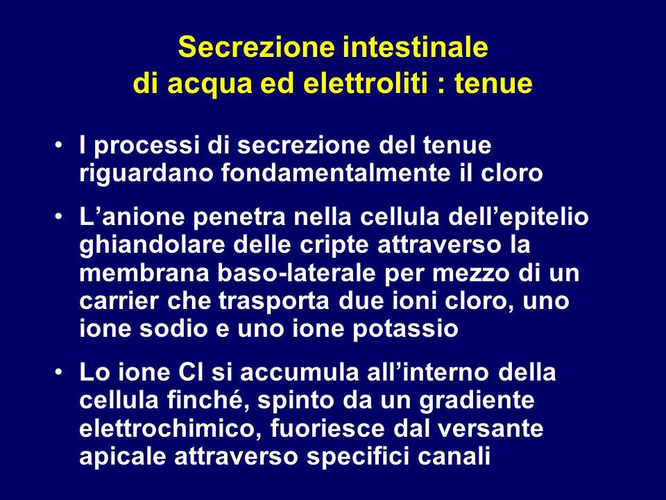 Secrezione intestinale di acqua ed elettroliti : tenue
