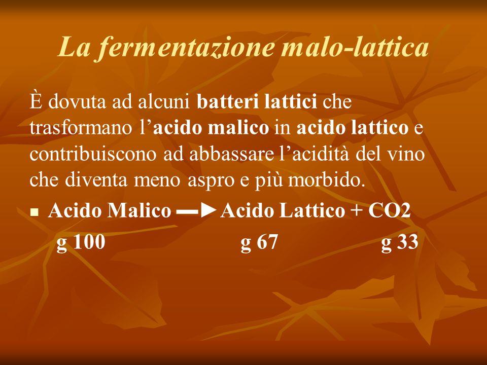 La fermentazione malo-lattica