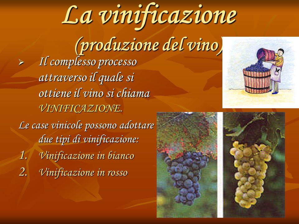 La vinificazione (produzione del vino)