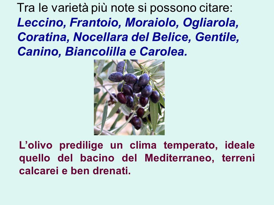 Tra le varietà più note si possono citare: Leccino, Frantoio, Moraiolo, Ogliarola, Coratina, Nocellara del Belice, Gentile, Canino, Biancolilla e Carolea.