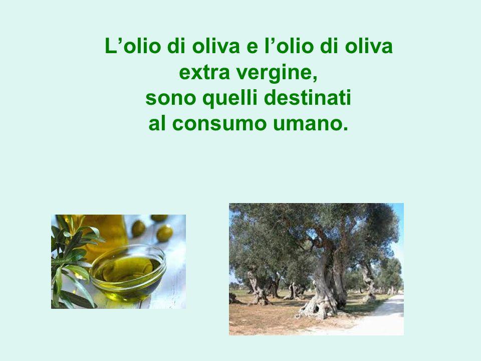 L'olio di oliva e l'olio di oliva extra vergine, sono quelli destinati al consumo umano.