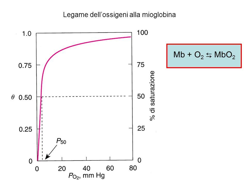 Legame dell'ossigeni alla mioglobina